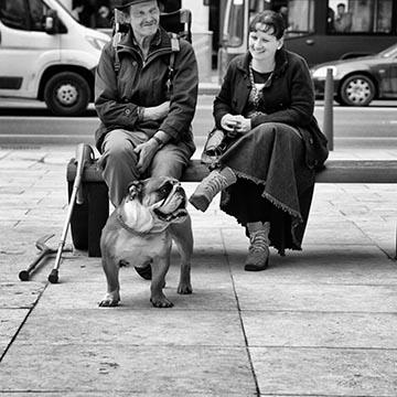 Бульдог. Улица. Будапешт. Фотографическое агентство GurFoto.Ru