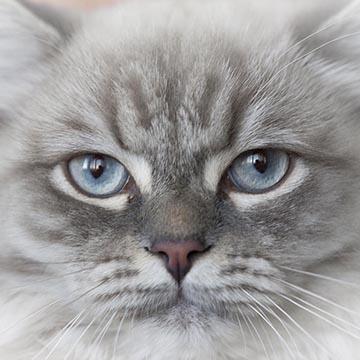 Кот Кэшью. Невский маскарадный. Фотографическое агентство GurFoto.Ru